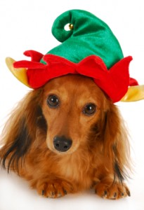 christmas elf dog