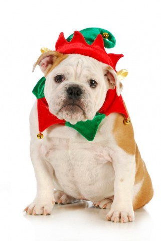 dog christmas elf