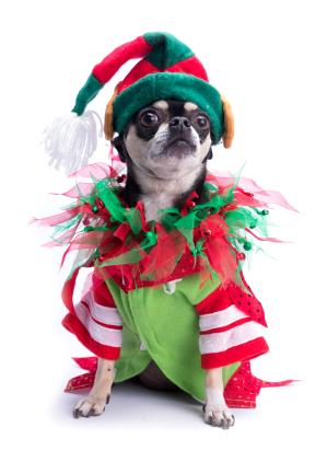 santas little helper elf dog
