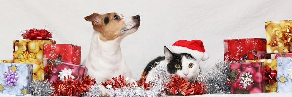 Christmas presents for cats and dogs.