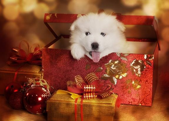 Holiday Gifts: Pets